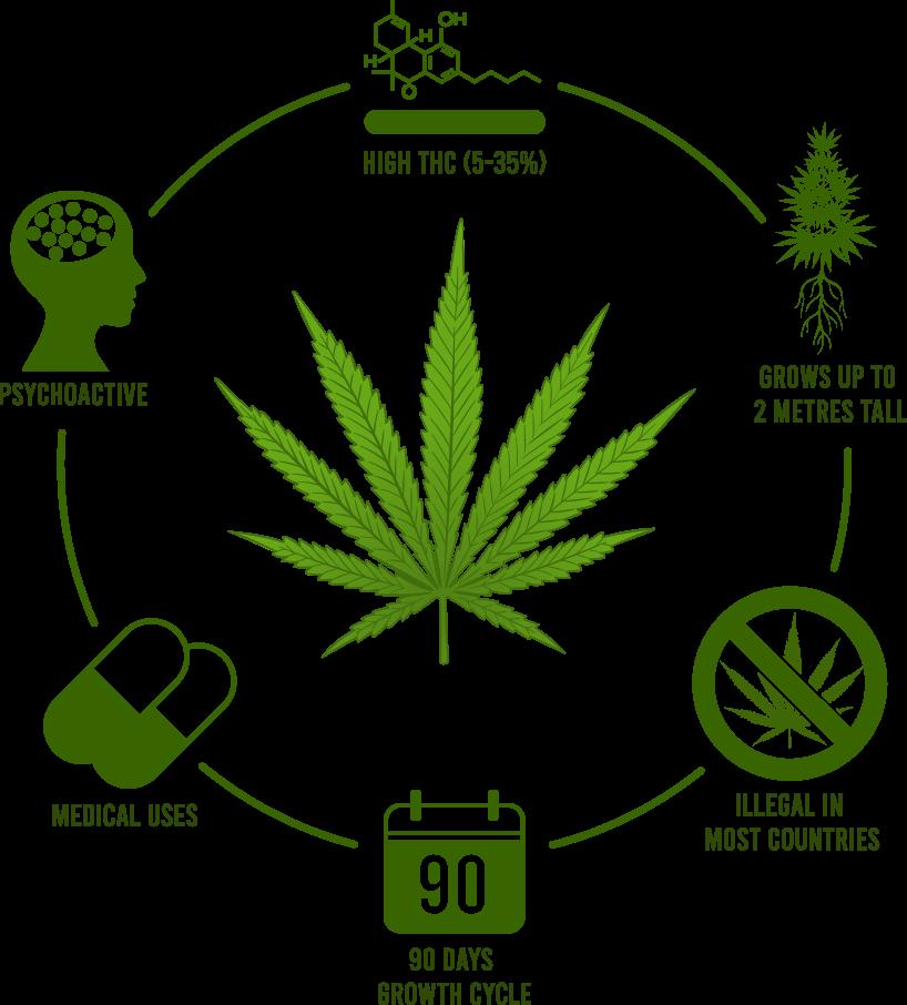 THC Diagram